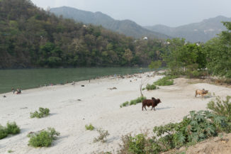 Gange_source_pelerinage