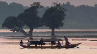 295249240-traversee-d'un-fleuve-bangladesh-inondation-vache