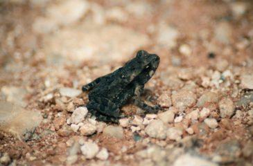 amphibiens_grenouille_ccWarlenGVasco