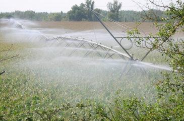 innovation_irrigation1050878369364691661